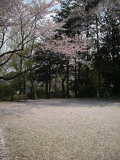 20080420sakura1s.jpg